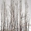 Foggy Winter Tree Fence 13271 by Jerry Sodorff