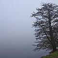 Fogy Lakeside by Ivan Slosar
