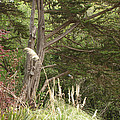Foliage Art by Lovina Wright