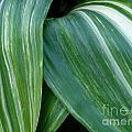 Foliage Folds by Kevin B Bohner