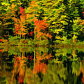 Foliage In New Hampshire by Pat Lucas