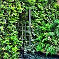 Foliage by Joyce Baldassarre