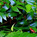 Foliage N Such by Jeanette C Landstrom