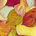 Foliage Quilt by Alan L Graham
