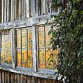 Foliage Reflections by John Vose