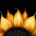Folk Art Sunflower by Brenda Bryant