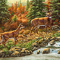 Whitetail Deer - Follow Me by Crista Forest