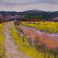 Follow The Daisies by David Patterson