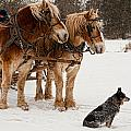 Follow The Leader by Keith Swango