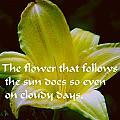 Follow The Sun by Gary Wonning