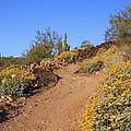 Follow The Trail by Doris Stafford