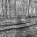 Follow Your Path by Art Dingo