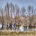 Folsom Dried Pond  by Diego Re