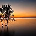 Folsom Lake Tree by Daniel Czerwinski