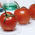 Food Research by GIPhotoStock