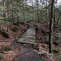 Foot Bridge by Catherine Gagne
