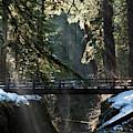 Footbridge Near Sol Duc Falls, Olympic by Art Wolfe