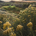 Foothills Sage by Michael Van Beber