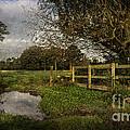 Footpath Bridge At Tidmarsh Berkshire by Ian Lewis