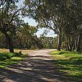 Footpath In Park With Shadows by View Factor Images