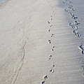 Footprints And Pawprints by Diane Macdonald