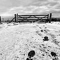 Footprints In The Snow by John Farnan