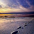Footprints In The Snow by Phil Koch