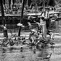 For The Birds Bw1 by Timothy Hacker