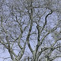 For The Love Of Trees - 2  by Hany J