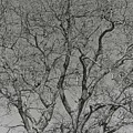 For The Love Of Trees - 2 - Monochrome  by Hany J
