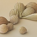 Foraminifera, Sem by Power And Syred