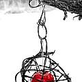 Forbidden Fruit by Aaron Aldrich