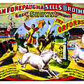 Forepaugh And Sells The Orfords by Diana Powell