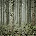 Forest #1 by Cato Kjoeita