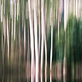 Forest Abstract by Caroline Gorka