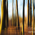 Forest Abstract by Mary  Smyth