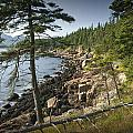 Forest And Rocky Shore In Acadia National Park by Randall Nyhof