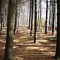 Forest And Trees by Gaetano Salerno