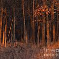 Forest At Sunset by Emma England