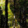 Forest Bench by Jonny D