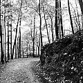 Forest Black And White 6 by Falko Follert