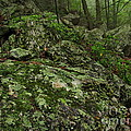 Forest Boulder Field by Joshua Bales
