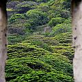 Forest Canopy Through The Window Of The Ruins by Douglas Barnard