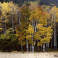 Forest Colors by Lynn Sprowl