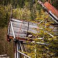 Forest Coveyor by Melinda Ledsome