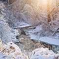 Forest Creek After Winter Storm by Elena Elisseeva