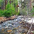 Forest Creek by Brent Dolliver