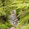 Forest Creek In Lush Rainforest Jungle Of Nz by Stephan Pietzko