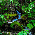Forest Creek by Robert Bales