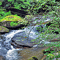 Forest Creek by Savannah Gibbs